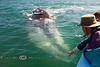 Petting a 50' California Gray Whale - Baja Mexico 2008