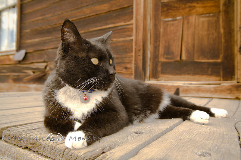 The Cats Collar says Bodey on it - Bodie Ghost Town CA 2008