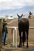 Washing the Mule down - Bishop CA 2008
