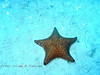 Star Fish in Virgin Islands 2004