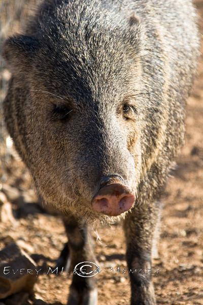 Wild Hogs - Arizona 2007