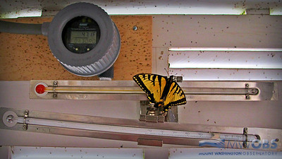 Butterfly In The Thermoshack