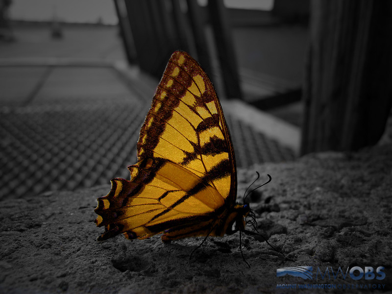 Butterfly On The Observation Deck