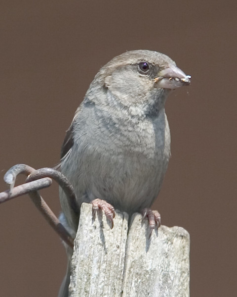 Bird03