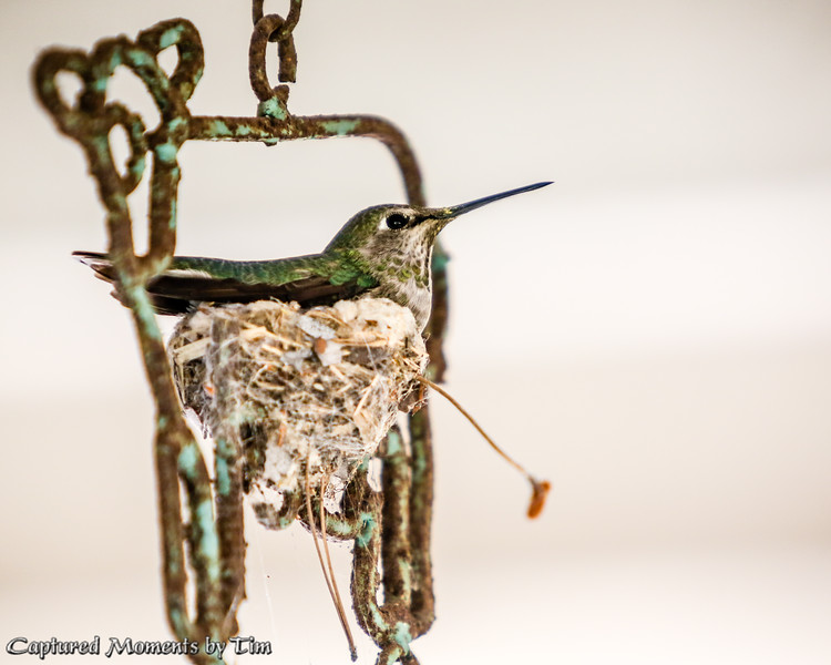 Wind Chime Nest_20160402_013