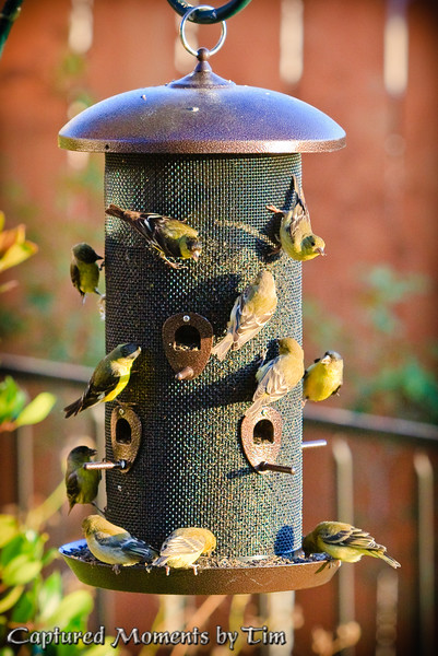 """""""Extra Finches on the Side, Please"""""""