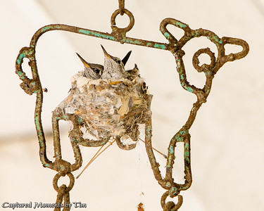 Windchime Nest_20160507_010