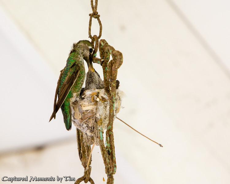Windchime Nest_20160507_003