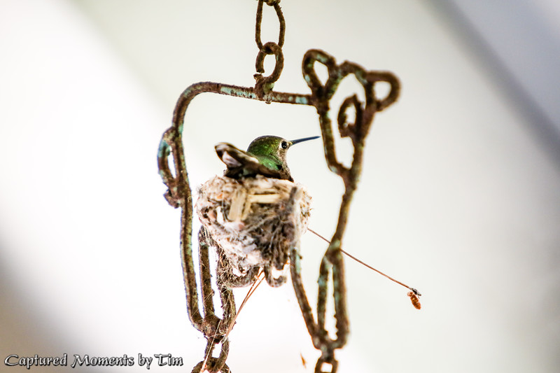 Wind Chime Nest_20160402_008