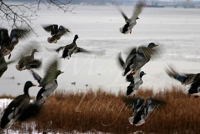 Birds_0041
