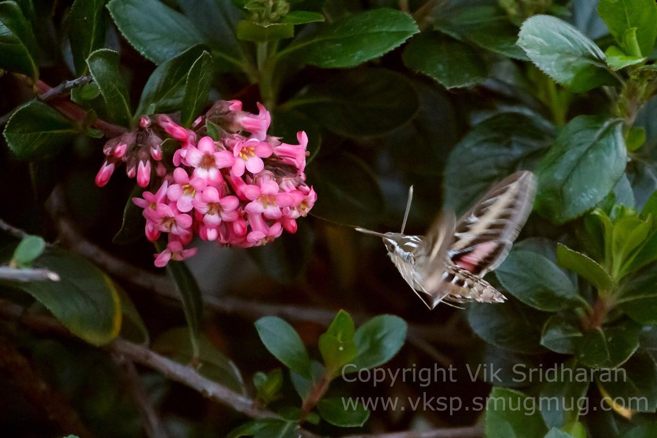http://www.vksphoto.com/Animals/Wildlife/Creepy-Critters/i-zWWXXX6/0/X2/IMG_7429CS5%203-22-13-X2.jpg