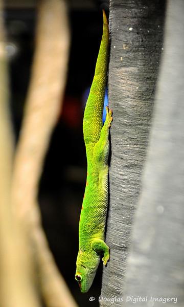 gecko001