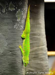 gecko002