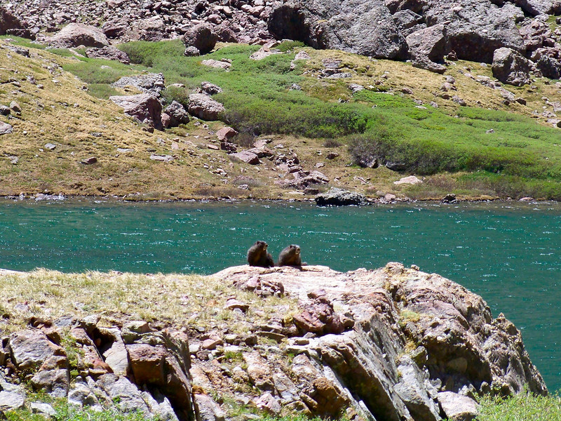 A pair of marmots relax at South Colony Lake, Sangre de Cristo Mountains