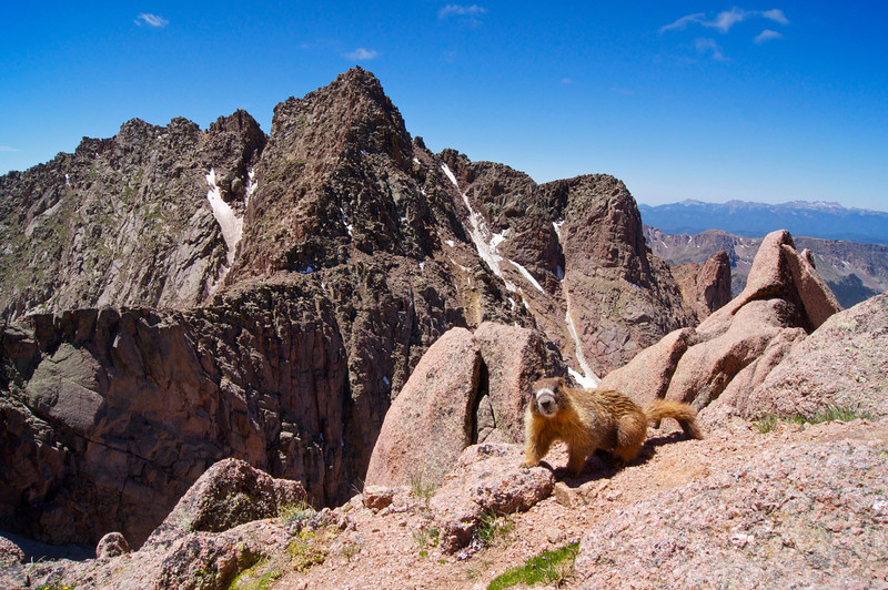 "Just off the summit of North Eolus, this friendly marmot, with its distinctive ""stripe,"" is apparently famous in the area.  Colorado San Juan Range"