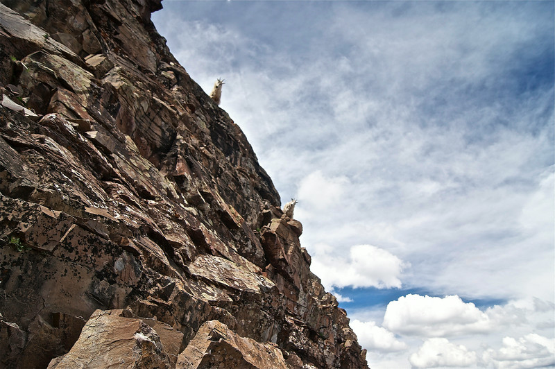 Exposure? What exposure?  Fearless Mountain Goats on the steep northeast ridge of Pyramid Peak;  Colorado Elk Range.