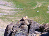 A Pika rests on a rock high above Belford Gulch between Mt. Belford and Mt. Oxford.