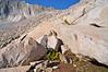 Ptarmigans, elusive high altitude birds, on Snowmass Mountain's east slopes; Colorado Elk Range