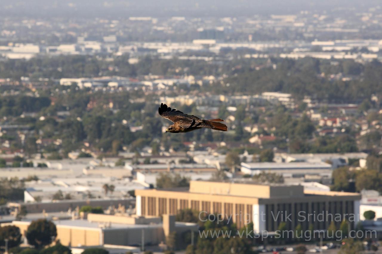 http://www.vksphoto.com/Animals/Wildlife/Random-Wildlife/i-MzPFJ57/0/X2/IMG4714-X2.jpg