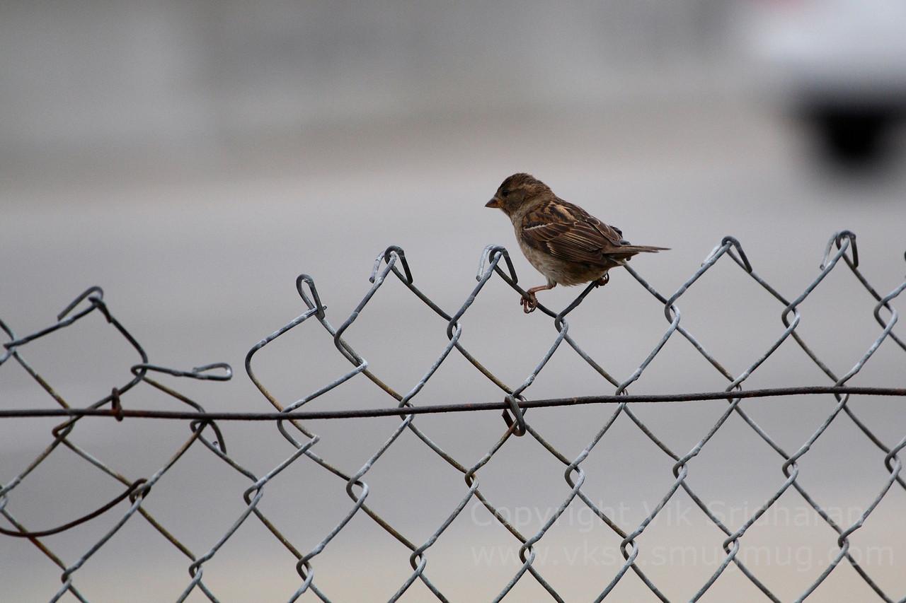 http://www.vksphoto.com/Animals/Wildlife/Random-Wildlife/i-jphFM3V/0/X2/IMG6725-X2.jpg