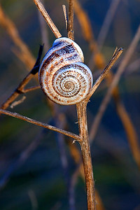 Snail shell on some twigs.