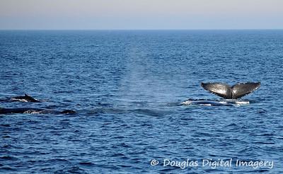 humpback007