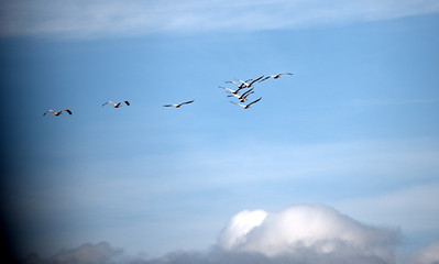 Pelicans and Clouds (shot through windshield)