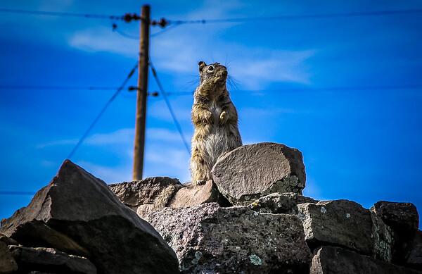 Remote Squirrel