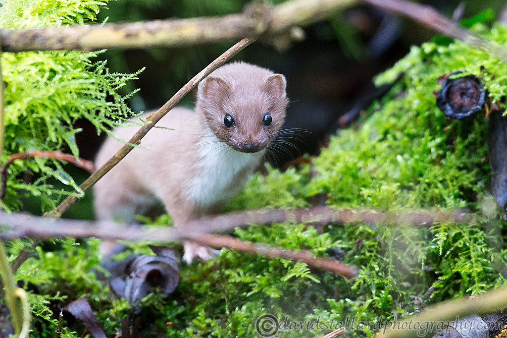 IMAGE: http://www.davidstallardphotography.com/Animals/Wildlife/i-5M544TX/0/XL/Lee%20Valley%2022-02-15%20%20010-XL.jpg