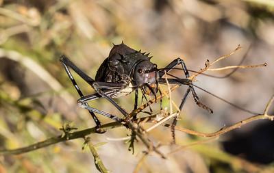 Unusual giant bug outside my room.