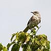 Motley bird