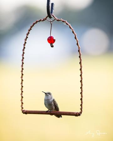 Hummingbird on a swing perch