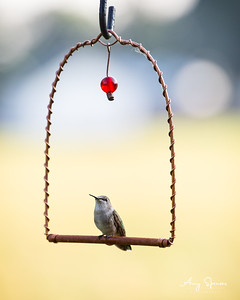 Hummingbird on a swing perch