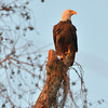 Bald Eagle, SNWR