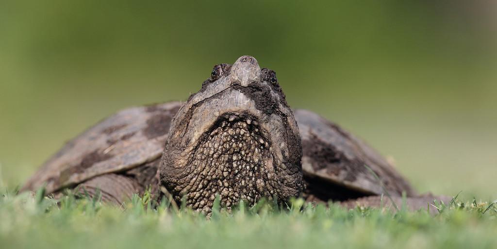 IMAGE: https://photos.smugmug.com/Animals/Wildlife/i-8SBjc8T/0/20c7f186/XL/608-XL.jpg