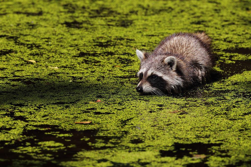 IMAGE: http://www.mikeswildlife.com/Animals/Wildlife/i-9PkLL9P/0/XL/699-XL.jpg
