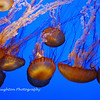 Drifters at Monterey Bay Aquarium, CA