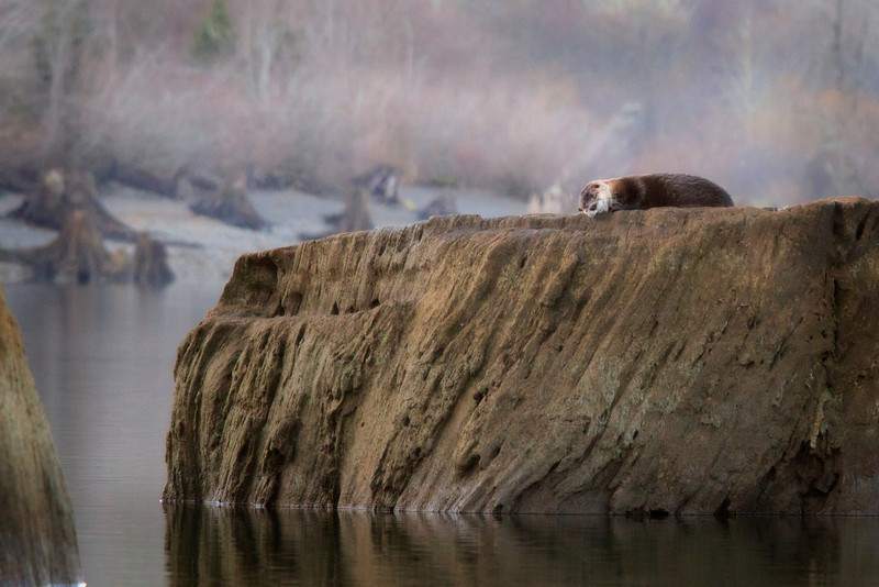 """""""otter"""" nap ---brief but beautiful"""