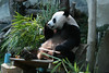 Panda sideview