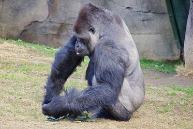 LA Zoo ref: b665b96e-20b2-4357-8fd9-0c3dd3510b7c