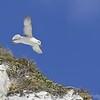 White Cliffs of Dover 18-04-15  0033