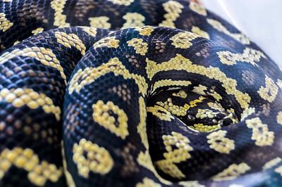 4-8-2013 Snake 1 SM