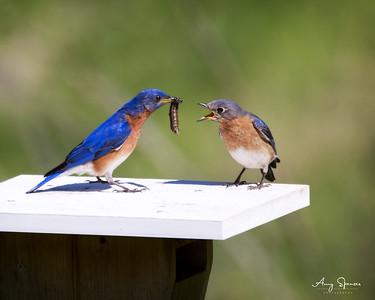 Mate feeding