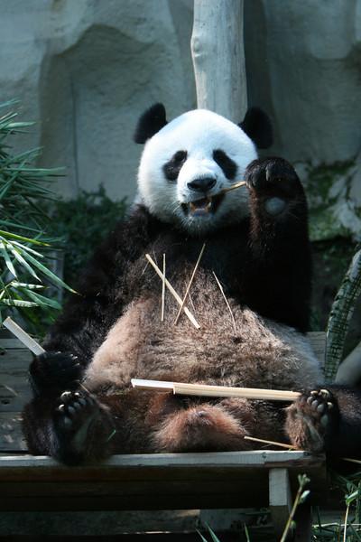 Ling Lieu panda stud