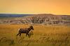 """Badlands Bighorn"" - July 23, 2013"