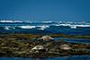Sea Turtles Honokohua Beach-2832