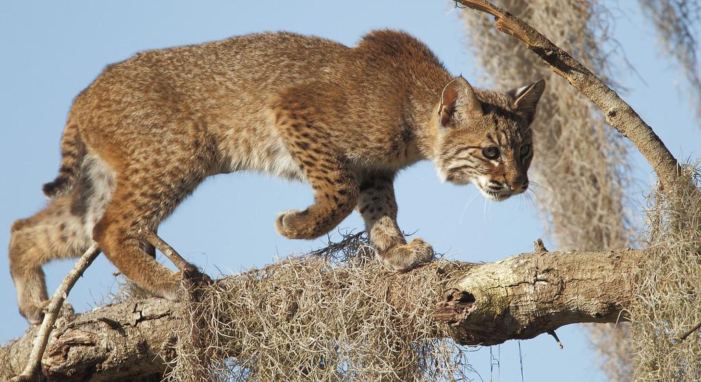 IMAGE: http://www.mikeswildlife.com/Animals/Wildlife/i-Qm4Bhw2/0/XL/2062-XL.jpg