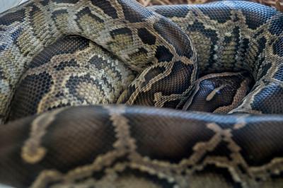 4-8-2013 Snake 2 SM