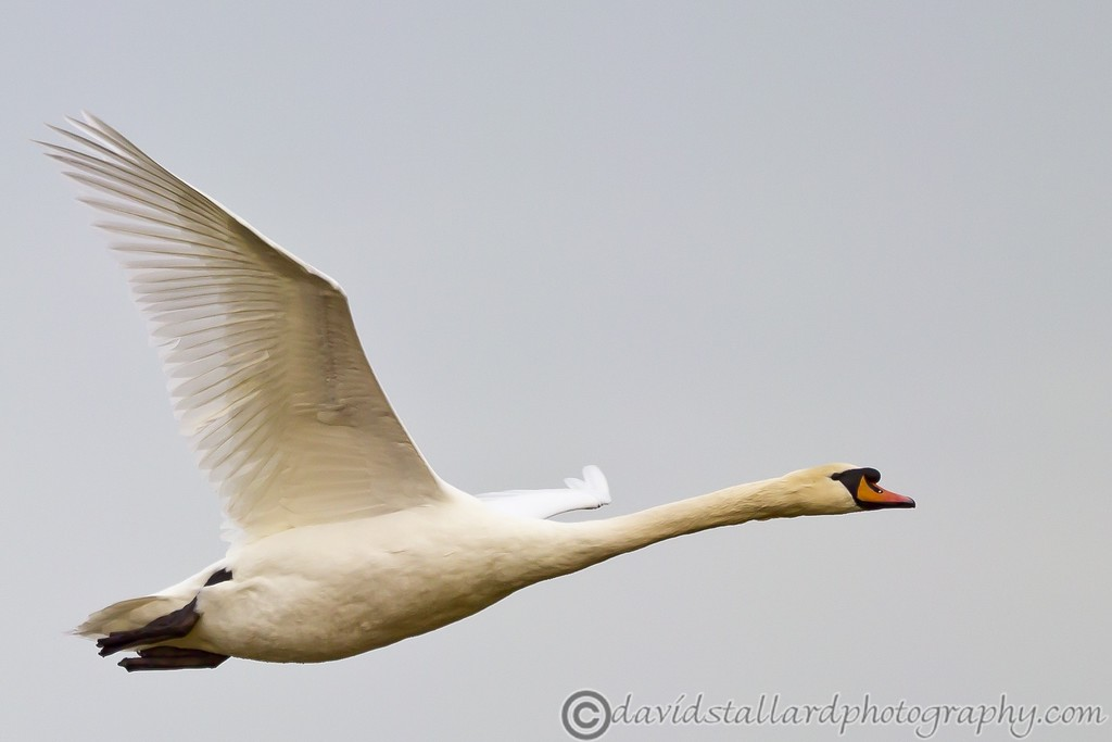IMAGE: http://www.davidstallardphotography.com/Animals/Wildlife/i-RsXKT98/0/XL/Rainham%20Marsh%2003-01-13%20%20032-XL.jpg