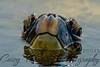 sea turtle face-2801